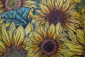 Sunflower Coloring