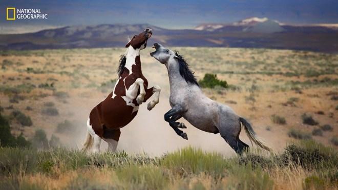 Дикие лошади Колорадо