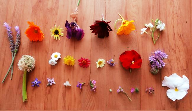 23 different flowers from the LovePlantLife garden. Flowering in October 2014