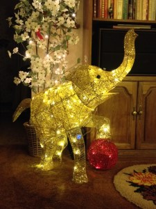 Sparkle elephant at home