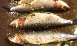 sardines.jpeg