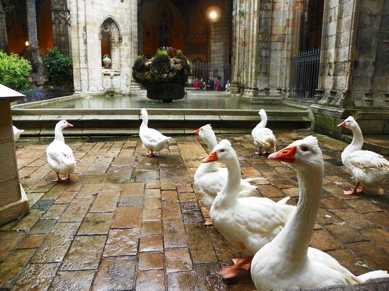 Что делают гуси в Кафедральном Соборе Барселоны?