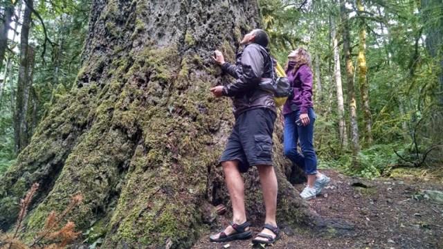 Giant Douglas Fir Trail
