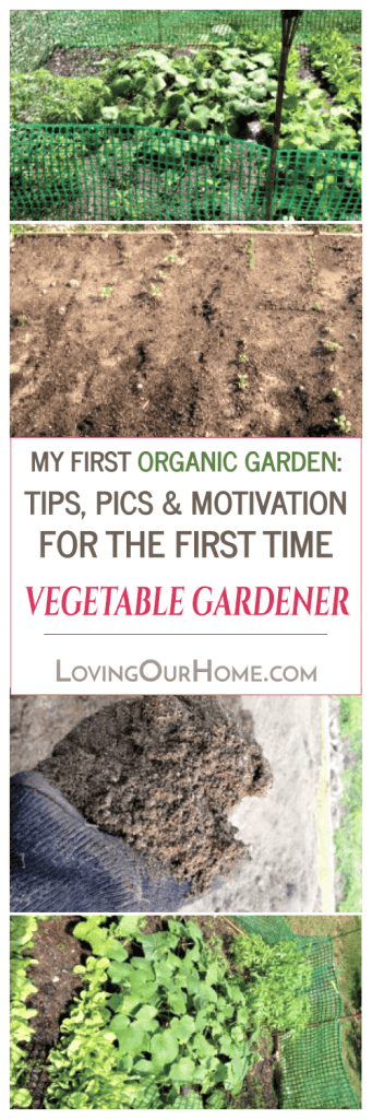 my first organic garden: tips, pics & motivation for the first, Garten ideen