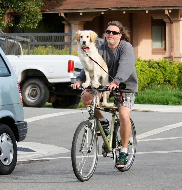 Homemade dog rack for bicycle