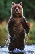 Bear! ... or is it?