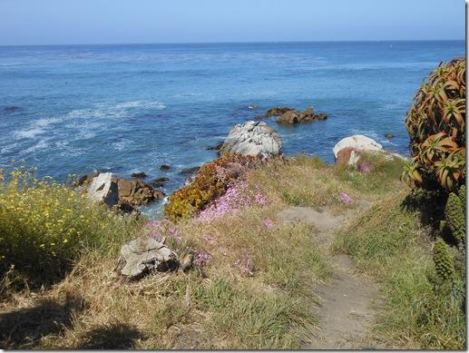 Pacific Grove iceplant 053