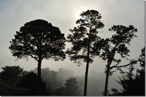 Three pines in fog