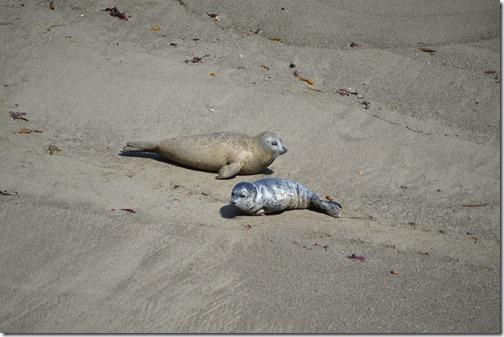 Seal pups-4