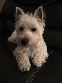 Small Of All Terrier Rescue