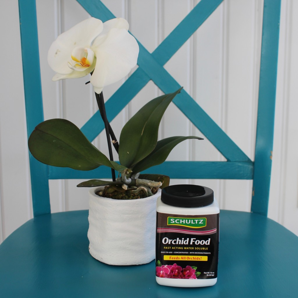 Best Orchid Plant Food
