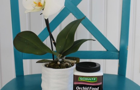 Orchid Care Made Simple