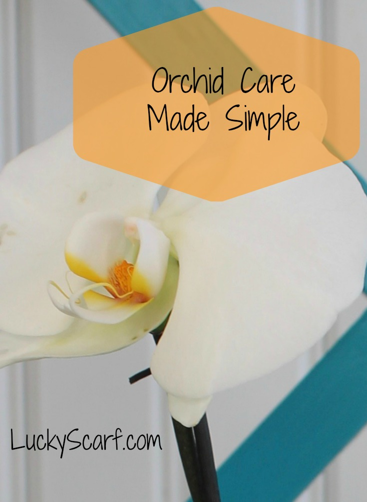 Easy Orchid Care