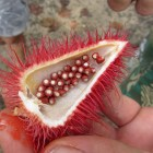 Moorea Lipstick fruit