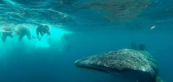 3 Observing the sharks from a safe distance so as not to disturb them