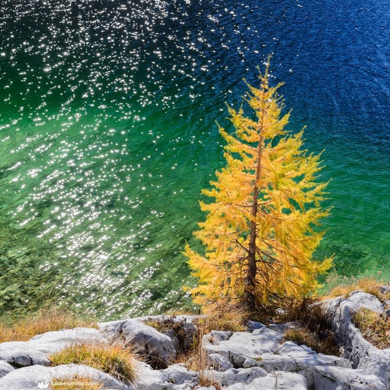 Autumn larches at Triglav national park