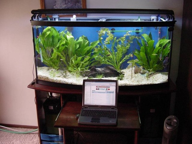Aquarium Stand   72 Gallon Bow Front   by Randy @ LumberJocks.com