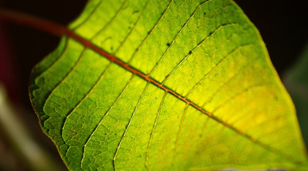 How An Artificial Leaf Might Reduce Global Warming