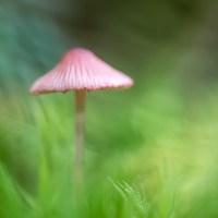 Sienestystä ja makroilua