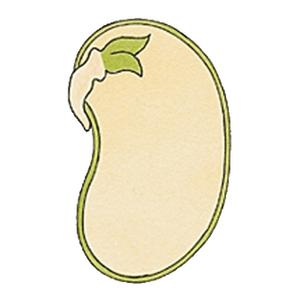 vegetaux3 [300x300]