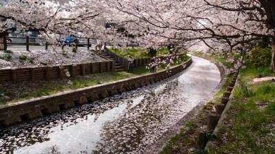 唐津の舞鶴公園の場所!桜の開花時期や駐車場は(ユーリオンアイス)