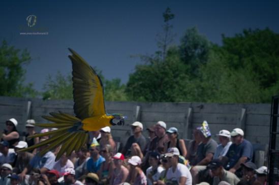 oiseaux vld 2 Une journée au Parc des oiseaux av Yves Bouthérand