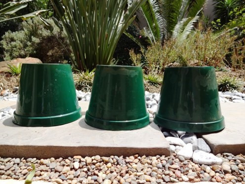 Clean your plastic planters and let them dry.