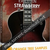 Orange tree samples evolution strawberry icon