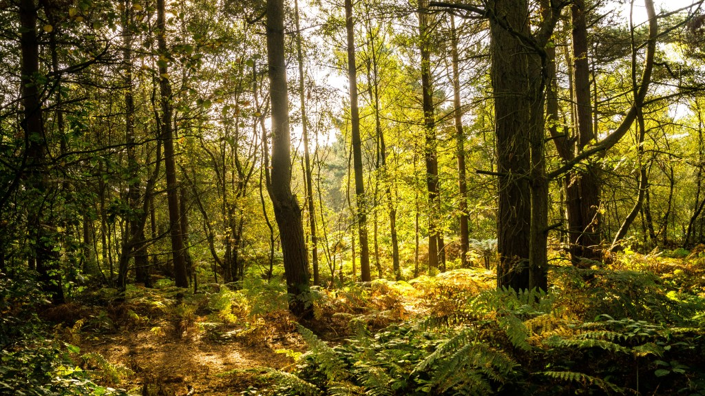Cannock Chase September 28th