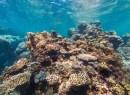 Opal Reef Australia