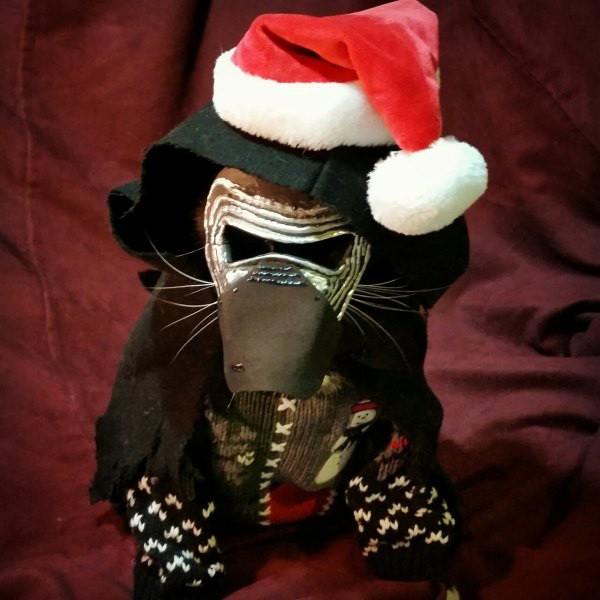 cat-cosplay-blog-5