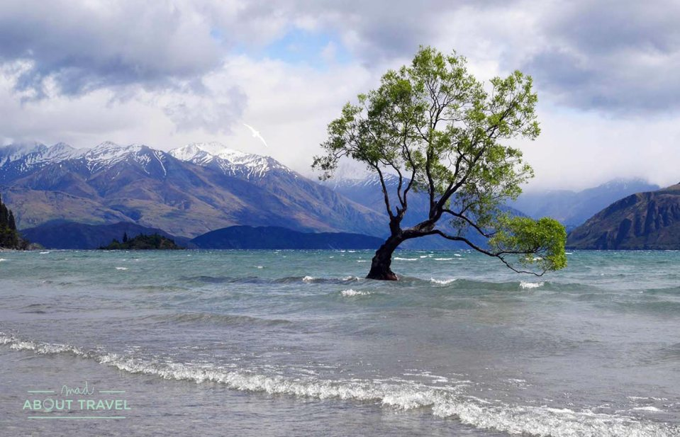 El árbol de Wanaka