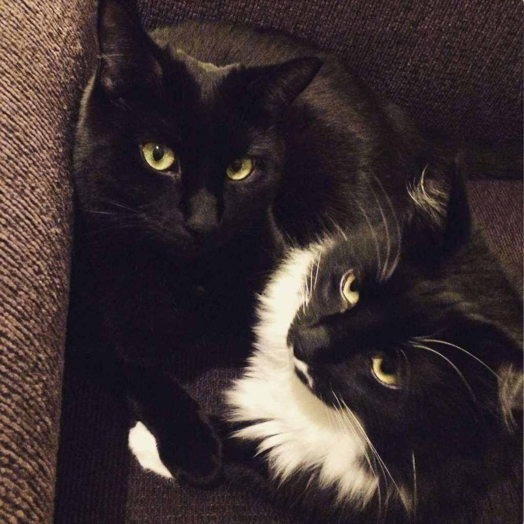 Rocky & Izzy