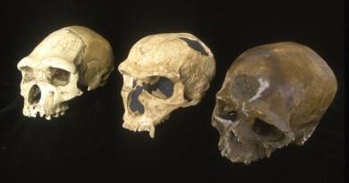 Le cerveau de l'homme de Tautavel clé de notre avenir ?