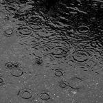 Rain, A cup of tea – Haiku