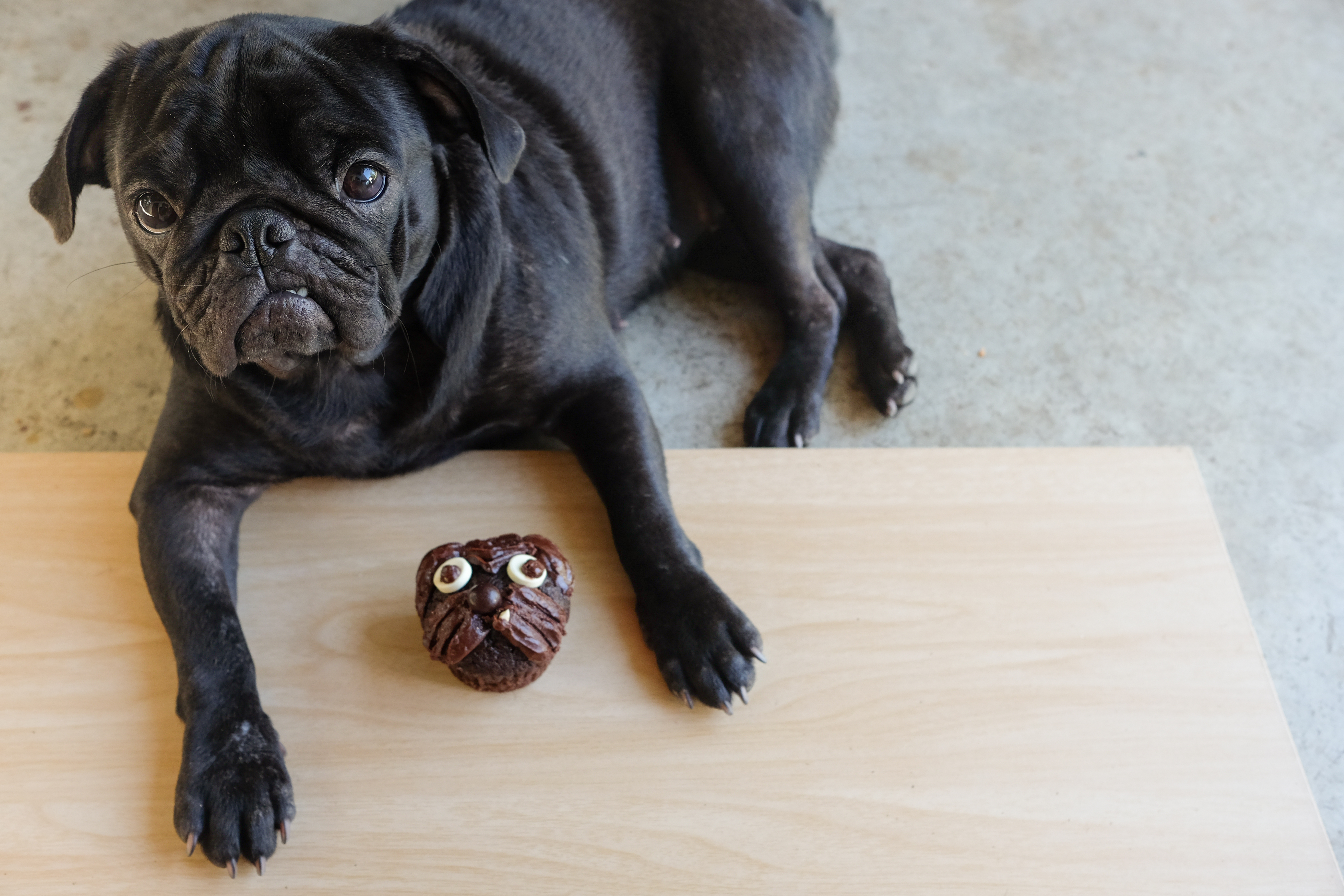 Fullsize Of What Happens When A Dog Eats Chocolate