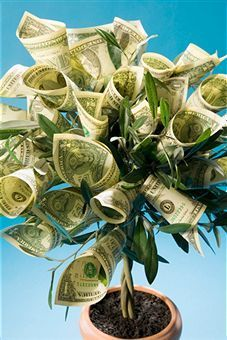 In short, making a money tree is one of the easiest and simplest tasks. All you need is some creativity and spare time. So splurge your creativity and come up with the best and unique money tree as a gift.