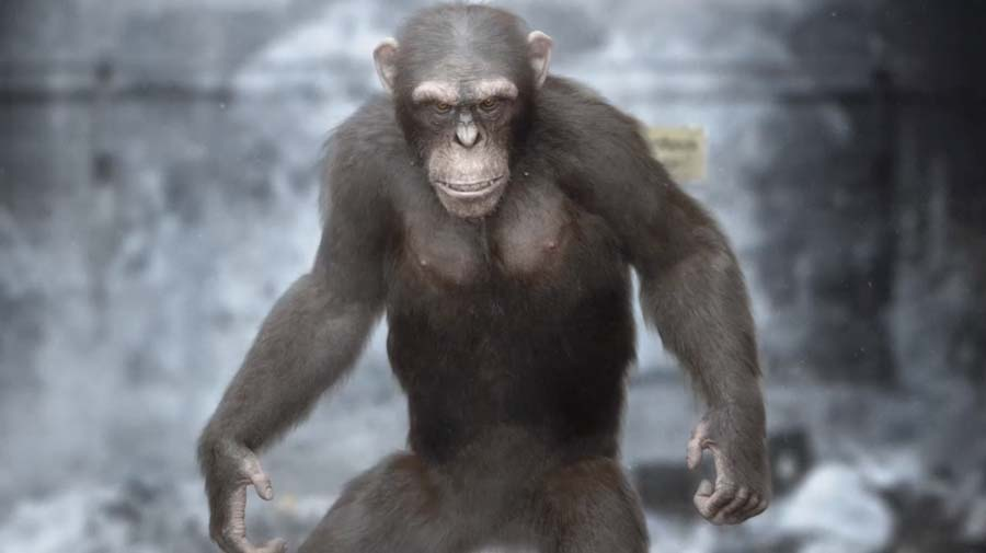 Adam Sacco - 3D Chimp