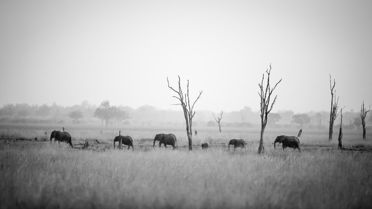 A small heard of elephants in the Nsefu sector © Edward Selfe