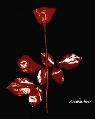 red rose copy