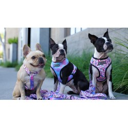 Small Crop Of Best Harness For Dogs