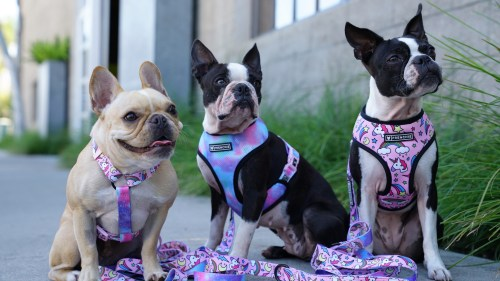 Cozy Dogs That Chew A Boston Terrier Harness Dogs That Pull Uk Harness Harness A Boston Terrier Harness