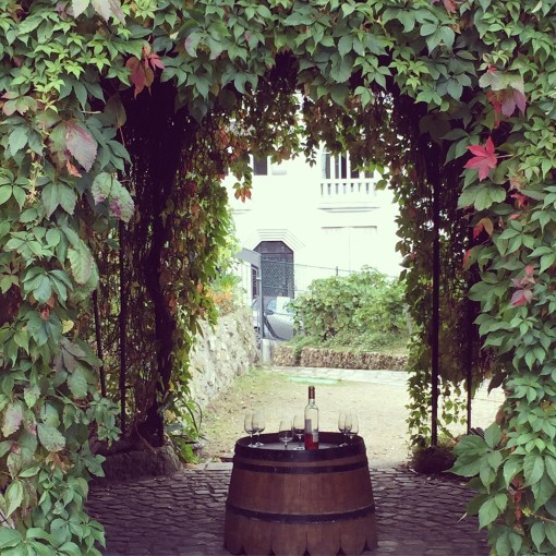 Vigne du Clos Montmartre, the only working vineyard in the city of Paris