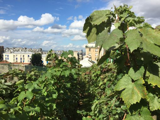 Views of Paris from the Clos Montmartre Vineyard