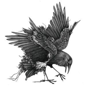 raven_72dpi