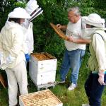 Honey Bee Etiquette