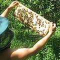 honey-ready-to-be-harvested-in-july-maine