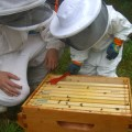 Family Honey Harvest