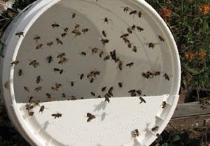 "Open-Feeding ""Pollen Substitute"""