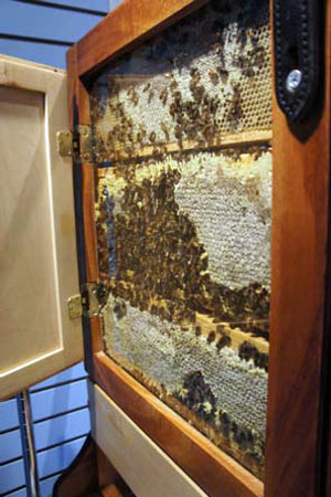 Observation Hive at The Honey Exchange in Portland